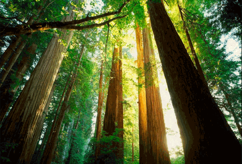Usal Redwood Forest Co. manages forests for RFFI